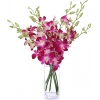 send orchids to dhaka, delivery orchids in dhaka