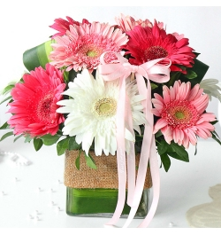 Send 9 Pcs. Mixed Color Gerberas in Vase to Bangladesh