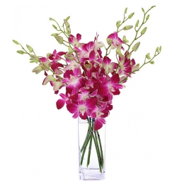 Send 10 Pcs. Pink Color Dendrobium Orchids to Bangladesh