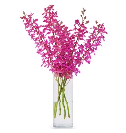Send 10 Stems Pink Color Orchid in Vase to Bangladesh
