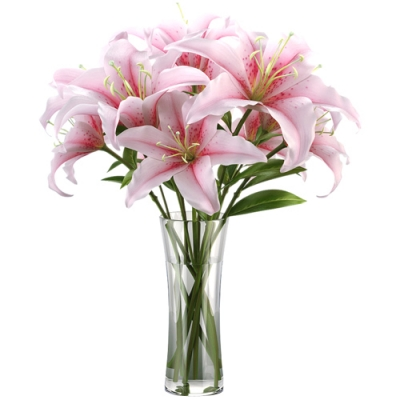 Send Fragrant Stargazer Lilies to Dhaka in Bangladesh