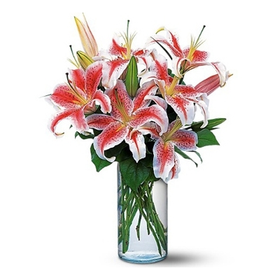 Send 6 Stalks Pink lilies in a Vase to Dhaka in Bangladesh
